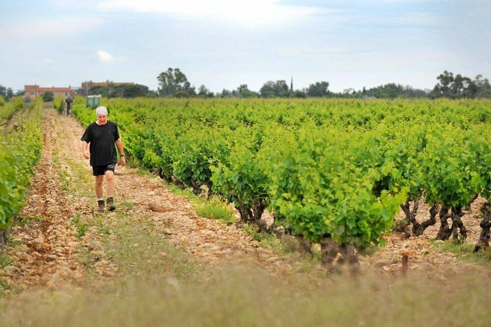 La reconversion professionnelle de Serge Baux, vigneron au Mas Baux