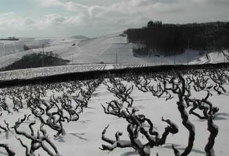 Hiver enneigé au vignoble du château de Javernand