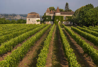 Vignes du Château du Frandat