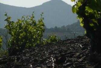 Vue du Pic du Canigou depuis le Domaine La Toupie