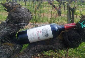 Au coeur des vignes du Château Fourcaud