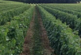 Au coeur des vignes du Domaine Brossette Paul André et Fils