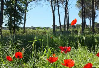 Période de floraison au Domaine des Feraud