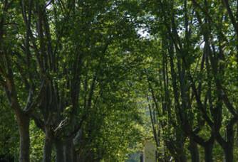 Allées ombragées du Domaine de la Portanière