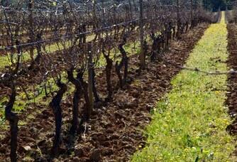 Les vignes du Château Revelette