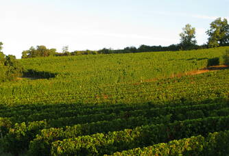 Le vignoble du Château Mallié Chante l'Oiseau