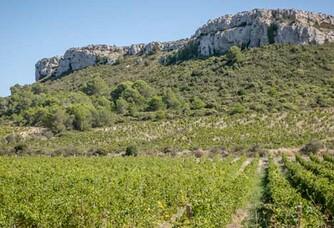 Les vignes du Domaine Pech Redon