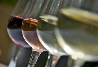 Les vins de toutes les couleurs du Clos des Sables