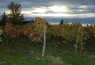 La nuit tombe sur le vignoble du Château Laurou