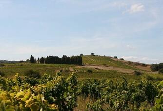 A travers les vignes du Domaine de L'Horizon