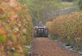 Les vignes du Domaine Jeanne Gaillard