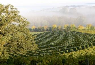 Le vignoble du Domaine Sregent